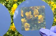تبدیل سلول خورشیدی مات به سطح شفاف با ایجاد سوراخهای ریز